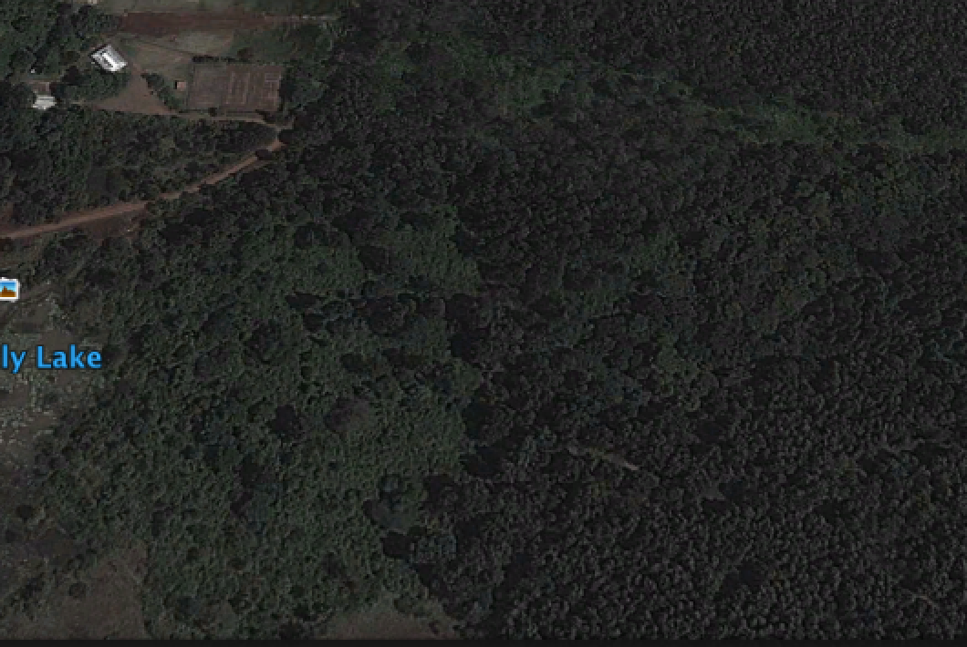 Karura Forest circa 2013 (Google Maps historical image), where River Cafe currently sits (fully forested cover) http://t.co/001kvkgQPG