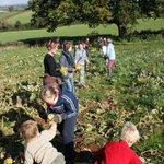 Help #harvest #autumn crops at #Bristol community farm #Saturday @tcfarm Booking essential ! http://t.co/8ka3iirlal http://t.co/FrTfhCQs2w