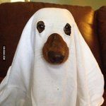 Im ready for Halloween! http://t.co/K7cQHk2Vp7 http://t.co/XU3WBbz0sV