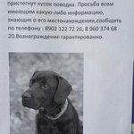Кто-то друга потерял. #ulsk http://t.co/KRexP2Bek1
