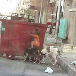 """@AlMasryAlYoum: #مصر| طفل يستعين بكلب للحصول على الغذاء من صندوق قمامة (صورة) http://t.co/xdrvIxNaO6 http://t.co/tsQqHo7Oh6""صورة العام"