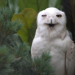 Good morning Toledo! We have some good news...its Friday! #ToledoZoo http://t.co/6WGj0gzH8g