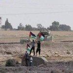 Palestinian youth raising #Palestine flag at Eastern #Gaza borderline, bravely & unarmed, unlike #Israel tanks. http://t.co/Ja1gZmpKlB