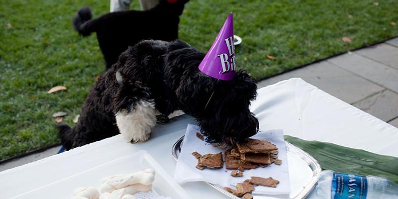 Happy Birthday Bo! http://t.co/HX54o1ejuA