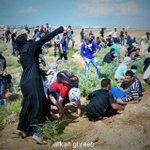 المرآة الفلسطينية في مواجهات اليوم على حدود غزة #فلسطين_تنتفض http://t.co/EsWIWh2FYp