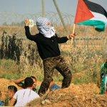 عادت الفتاة الملثمة لترشق جنود الإحتلال شرق قطاع غزة بالحجارة , حجر وعلم فلسطين http://t.co/VGQ7eFUk0m