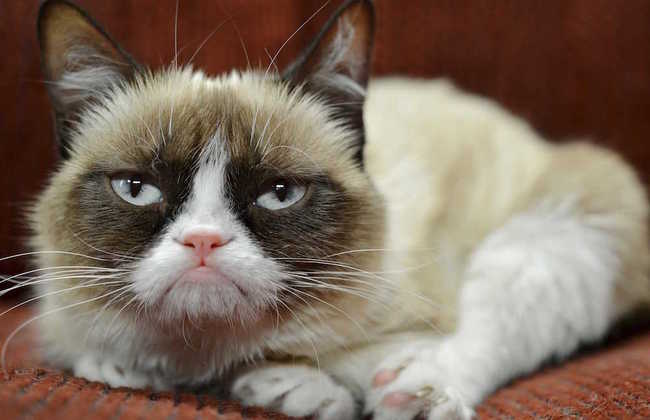 TONIGHT at @strandbookstore: Join Grumpy Cat  for the premiere for her latest book http://t.co/v6WFoPXjKA http://t.co/Fg65BMaN6E
