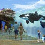 Califórnia impede parque SeaWorld de criar novas orcas em cativeiro http://t.co/aMyisFFcUF #G1 http://t.co/g1MwAdmfvW