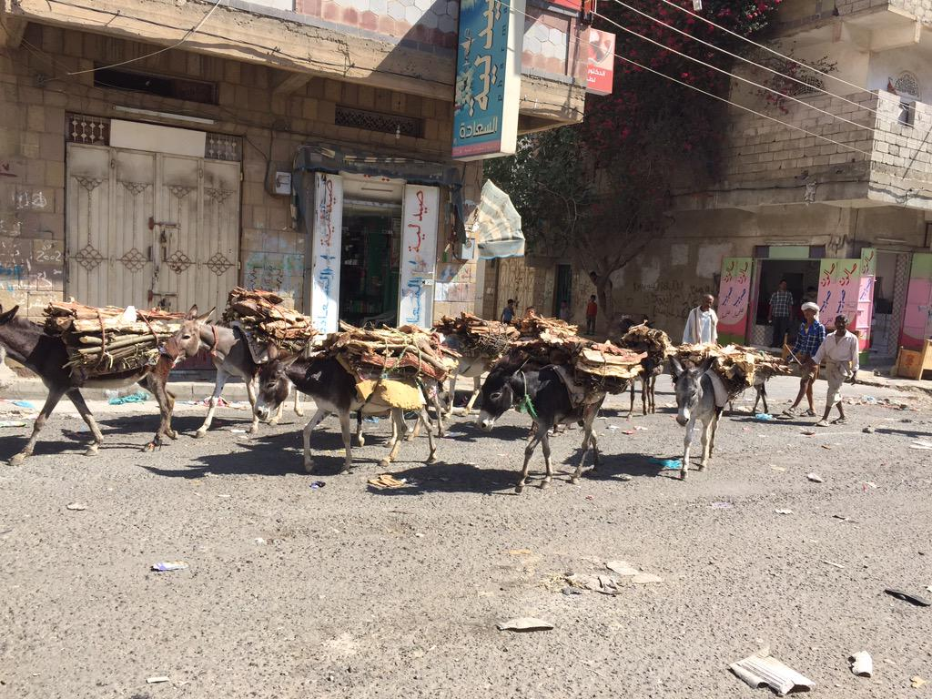 Donkeys carry wood every morning to the under siege city of #Taiz . No electricity, no food, no water, no medicine. http://t.co/2RHFprI2oS