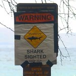 25-yr. old man critically injured after shark attack at Leftovers on North Shore: http://t.co/378HwwhjDk http://t.co/DmFlfDQUul