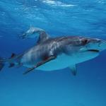 Shark bites surfer on Oahus North Shore http://t.co/yYY1aBxAJO http://t.co/QUauA1Pckd