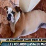 #JesúsMaría: salían de veterinaria y les robaron a su mascota ► http://t.co/cWCa3YMHuz http://t.co/y3Mmife8uc