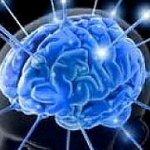Ricostruito al computer frammento di corteccia cerebrale http://t.co/kUXkby4e58 http://t.co/QAQqqMTmdT