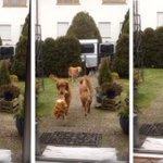 #YouTube Estos perritos están felices de poder ayudar en casa. ► http://t.co/zhygyEgw83 http://t.co/SQS12vmfdP