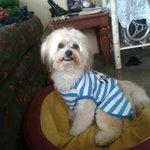 @DrVet_Peru Su seguidor numero uno Toffy el engreído de la casa http://t.co/oP563uty2w