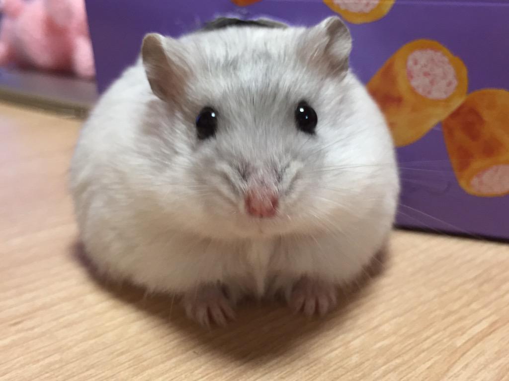 http://twitter.com/toro303606/status/648526911295983616/photo/1