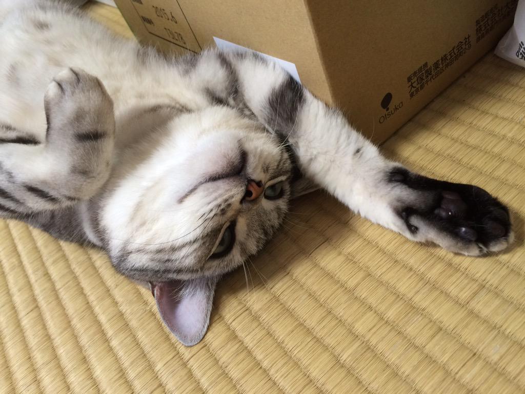 http://twitter.com/mifuyu_916/status/648686083207593984/photo/1