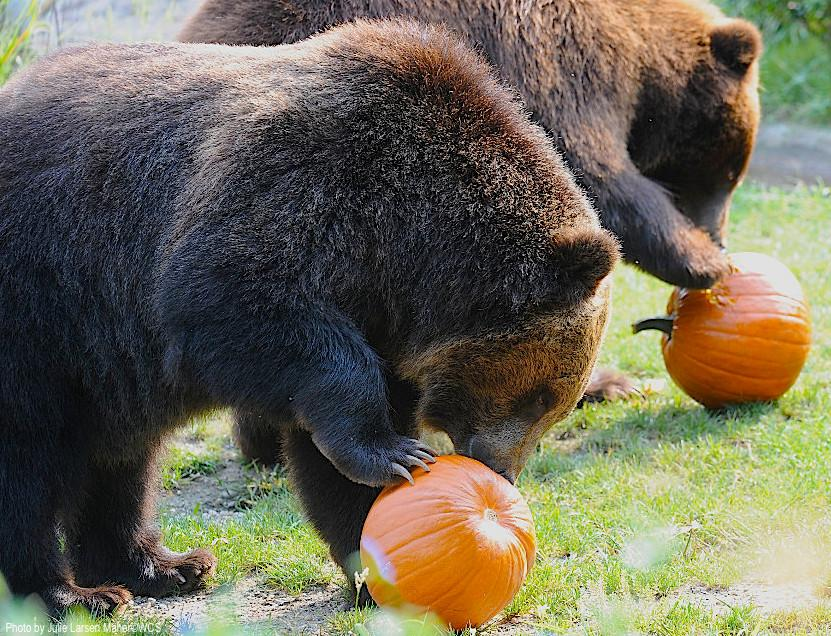 Who doesn't get excited for #pumpkins in the #fall? http://t.co/eCup29HYDs