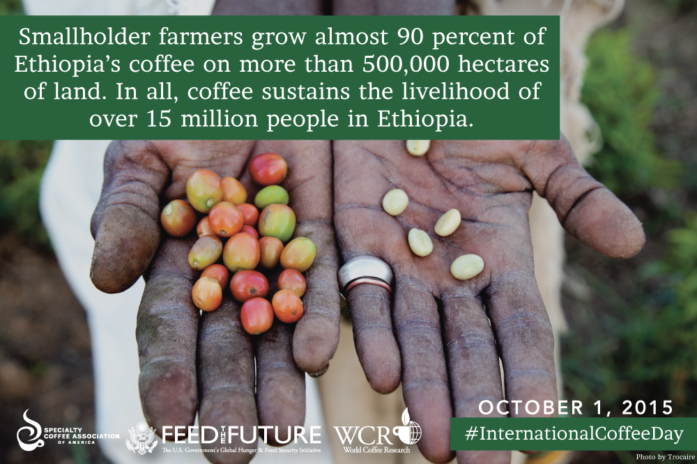 Ethiopia is one of the many coffee regions we'll be celebrating tomorrow. #InternationalCoffeeDay http://t.co/xkhtbyFA64