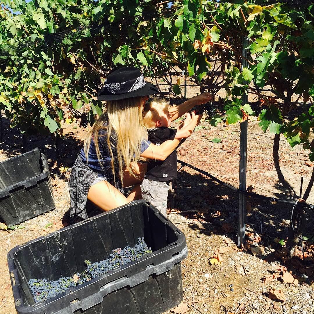 RT @FergusonCrest: #WeLove our little #farmerintraining.???? #FergusonCrest #AXL #Syrah #grapeharvest #wineharvest https://t.co/qMyV254EPp htt…