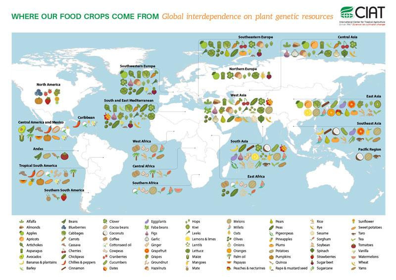 #DoYouKnow where our foods crops come from? Research by @CIAT_ @cgiarclimate @CropTrust http://t.co/y5yGxr44Zd http://t.co/Ix7x3sh5dh