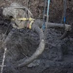 RT @nytimes: Woolly mammoth found under a farmer's soy field in Michigan http://t.co/CdDXIgenPC