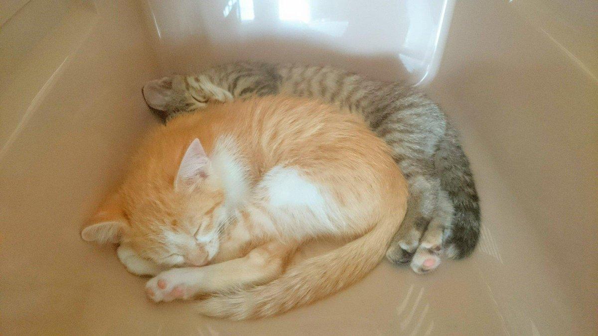 新しい家族が増えたよ http://t.co/5LIixNyq5U