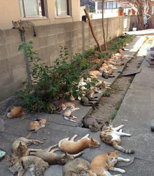 庭にマタタビを植えた結果 http://t.co/ovXC2oE5KY マタタビ植えなきゃ。 http://t.co/90YvtlZd8Z