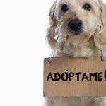 #QUERÉTARO: Lugares donde puedes adoptar mascotas -> http://t.co/qz4SJMkAjQ http://t.co/74mBmD5ZkQ