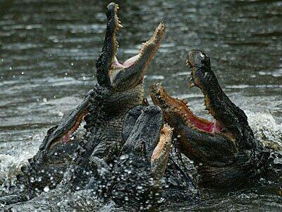 #Gators are swarming!! http://t.co/ksXT4dfRuN