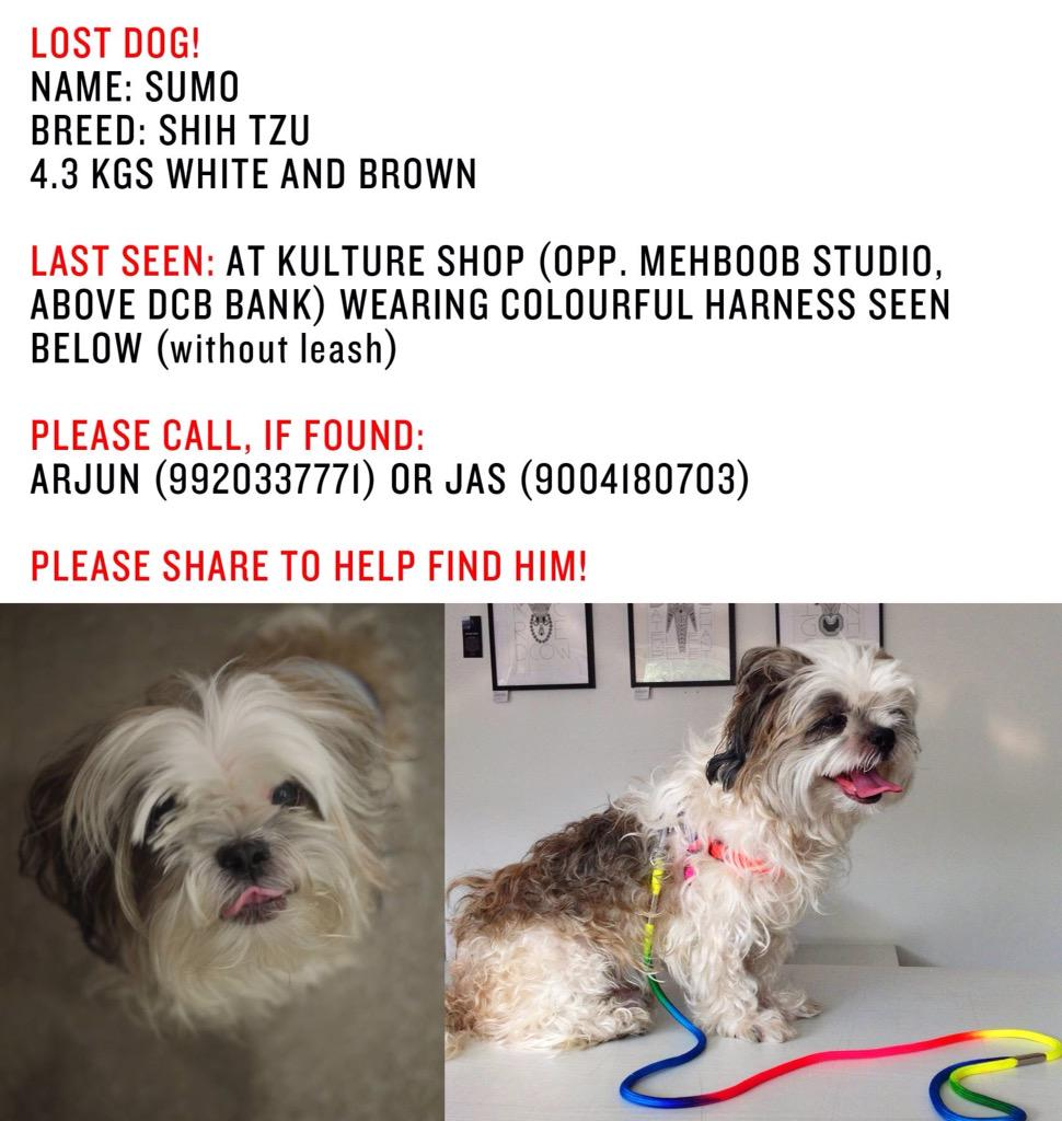 My friend has lost her pet Shitzu sumo in Bandra. Pls pls read the details below and notify them if you find him. http://t.co/PWcR02wxaR
