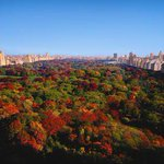 The best Fall foliage in #NYC can be seen right here from @RitzCarlton #NewYork #CentralPark! http://t.co/1HLZv5J1Mg