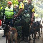 16 perros de la unidad de rescate de la Marina mexicana con su respectivo entrenador incursionan en áreas del alud. http://t.co/LtMvft6jpG