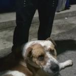 "VIDEO  Niño busca hogar para su perro ""Bruce"" #TragediaElCambray . Vía @Luisvela_pl http://t.co/4vUWSQvPDf http://t.co/1hbuAnLcgb"