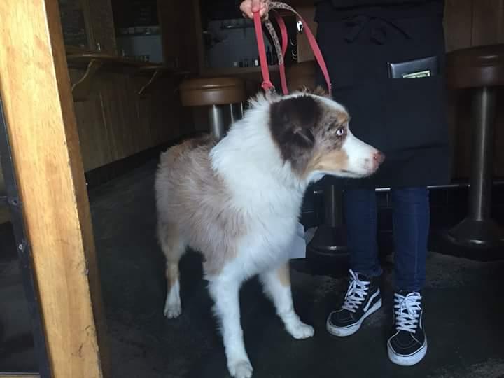 @YoVenice @Venice311  found dog!!! http://t.co/yHWNqn52uN