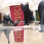 1000RT:【集める】ベローチェでもらえる黒猫フィギュア『ふちねこ』が可愛すぎる http://t.co/qn4c7FYlbM シャノアールの創立50周年記念。シャノアールはフランス語で黒猫という意味なのだそう。 http://t.co/dOCZDcpbtz