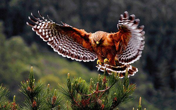 """""""Without love we are like a bird with broken wings.""""~ http://t.co/v02fL6Rx9E"""