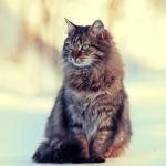 【そうだったのか…】死期が近づくと猫は姿を消す? その理由とは http://t.co/LeJvgziAXl 死ぬところを見られたくないのではなく、具合が悪い時に静かな場所へ移動し、体を休めて治そうとするためだそうです。 http://t.co/jsJsepWLRl