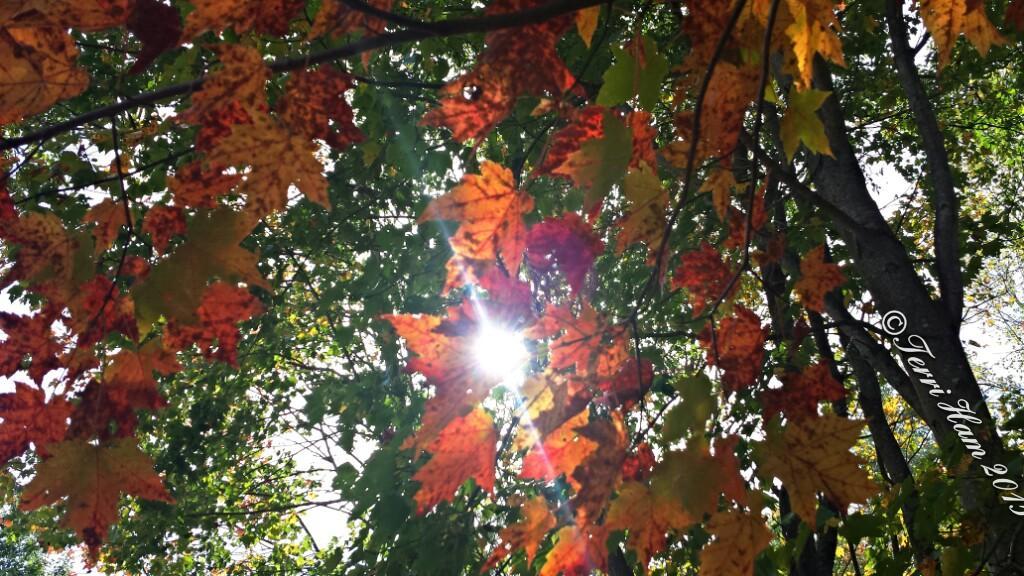 #Mainephotography #foliage http://t.co/rH5Jo89vLJ