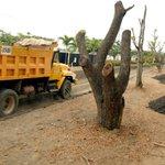 Ministerio inspecciona el traslado de árboles en #Samborondón. http://t.co/XAGNtDzBJt http://t.co/5ky2dmZR3p