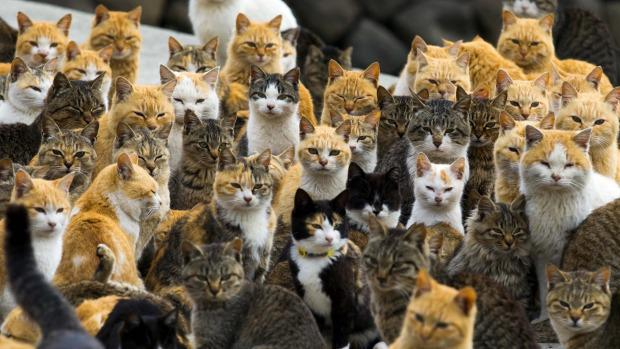 Join the cool cats at the next #newsrw events 21/10 and 1/12 London http://t.co/BmGfljvnQp http://t.co/AFvP4SaoVo