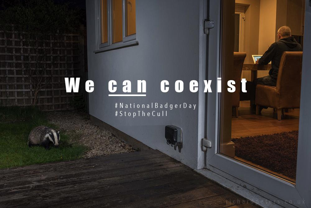 Today is #NationalBadgerDay. Let's #StopTheCull. There is another way. We can coexist! @BadgerTrust http://t.co/c6L8cIVBqG