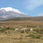 "#FelizMartes ""Mientras llegas a tu destino, disfruta del camino"" Imponente Chimborazo @AllYouNeedisEC @makecuador http://t.co/0NroRI17E2"