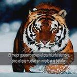 BUENOS DÍAS AMIG@S El mejor guerrero no es el triunfa siempre sino el que vuelve sin miedo a la batalla #FelizMartes http://t.co/VFQ8lefg21