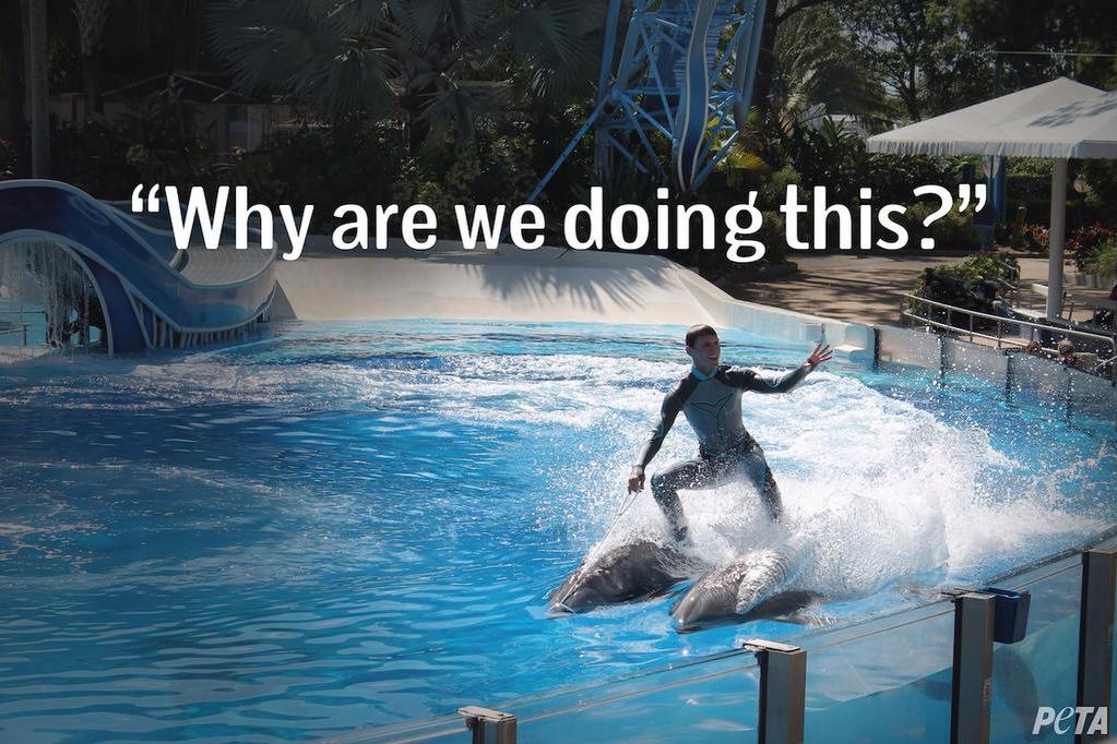 Dolphins don't want to be surfboards at #SeaWorld. They want to be dolphins. #EmptyTheTanks http://t.co/xvLjN3kqc1