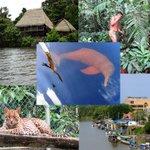 Ven y disfruta en #Orellana este feriado, conoce el delfín rosado, cascadas, ríos, zoológico, museo arqueológico, etc http://t.co/e7ddnNYJ9B