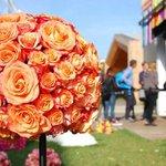 #Ecuador cuenta a con más de 400 variedades de rosas, catalogadas como las mejores del mundo ➡http://t.co/Vwanwr1mm7 http://t.co/zgCUiZlNBF