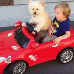 Youve had a long day, watch this dog drive a little boy around in a toy car http://t.co/okvHd8mJMG Pic: YouTube http://t.co/oN8dmMv1wy