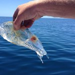 A translucent fish. http://t.co/bSjNEwnYlg