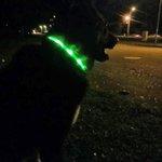 Vai Tev ir suns, kurš tumsā spīd? Parūpējies, lai atstarotājs ir arī Tavam mīlulim! @Valsts_policija http://t.co/1mY5uWKQd9
